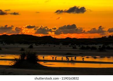 Seagulls in sunset on Amrum