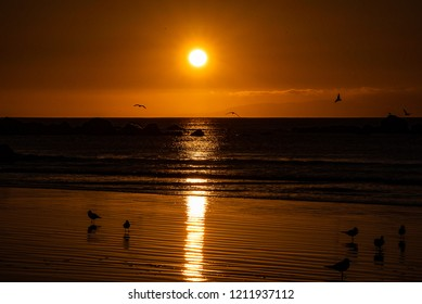 Seagulls in the sunset on a beach with small island in the background.
