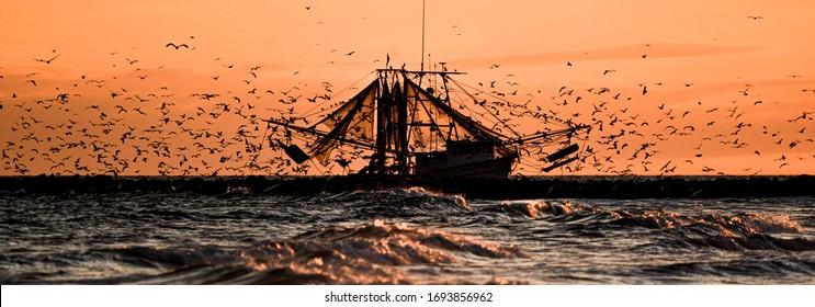 Seagulls Swarm Fishing Boats on the North Carolina Coast at Sunset