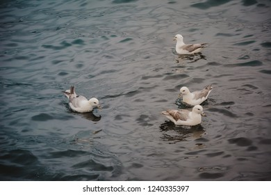 Seagulls swimming in the sea on a summer overcast day, several birds, blue water.