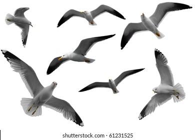 seagulls texture