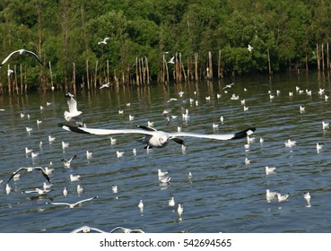 Seagulls in Thailand