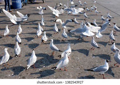 """Seagulls waiting for food on the street in Bang Pu, Samut Prakan, Thailand. The sign on the blue container says """"Bang Pu Recreation Center"""" in Thai."""