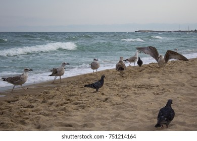 Seagulls walk on the seashore