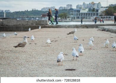Seagulls wolking on the beach