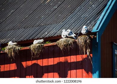 Seaguls on a typical red house in norway