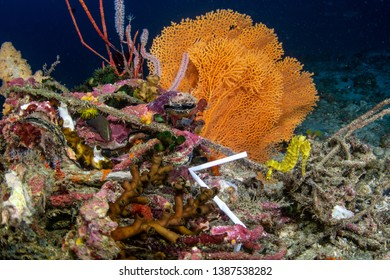 Seahorse with plastic straw in polluted tropical reef