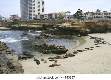 Seal Beach La Jolla, San Diego California