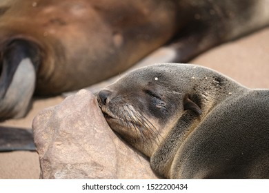 Seal colony in Cape Cross, Namibia