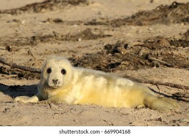 Seal cub looking