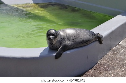 A seal in Ecomare on the dutch Island Texel