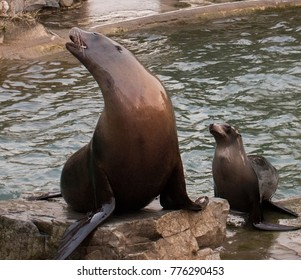 Seal family - Cologne,Germany - 8th December 2017