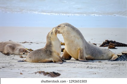 Seal family photo. Seal with baby seal. Seal love