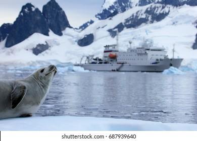 Seal in front of ship, boat, Antarctic Peninsula, Antarctica