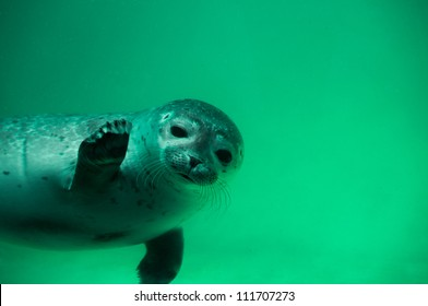Seal - Greetings from Northsea