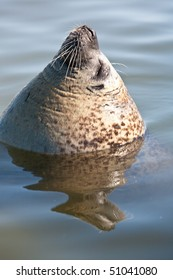 Seal with head above water