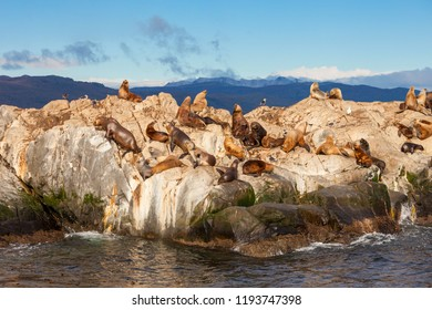 Seal Island in the Beagle Channel near the Ushuaia city. Ushuaia is the capital of Tierra del Fuego in Argentina.