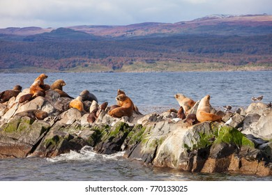 Seal Island in the Beagle Channel near the Ushuaia city. Ushuaia is a capital of Tierra del Fuego in Argentina.