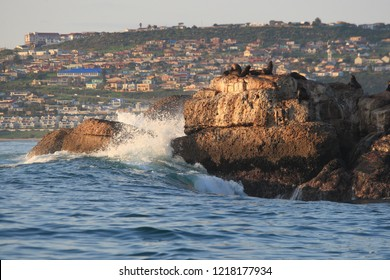 Seal Island off Mossel Bay, with its colony of Cape fur seals, Arctocephalus pusillus pusillus, South Africa, Indian Ocean