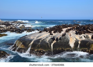 Seal Island in South Africa
