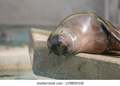a seal lies on a stone