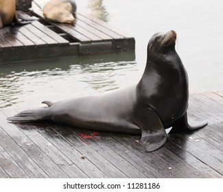 seal on deck