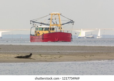 A seal on a sandbank watching a fishing boat passing by in the  Oosterschelde in the Netherlands. The zeeland bridge is in the background