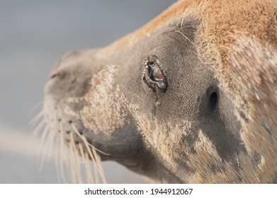 seal portrait with sad face and tears