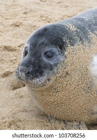 A seal pup starting to shed it�s fur