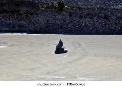 Seal pups on Wharariki Beach, South Island, New Zealand
