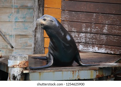 Seal show, Sydney, Australia