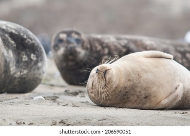 Seal sleeping on the beach