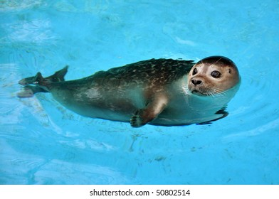 Seal Swimming Images, Stock Photos & Vectors | Shutterstock on seal clip art, seal in the sea, seal animals, seal on land,