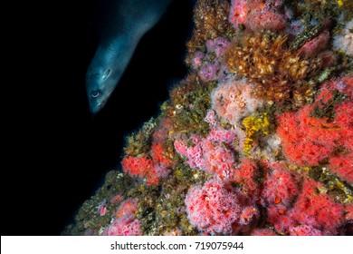 Seal watching underwater photographer