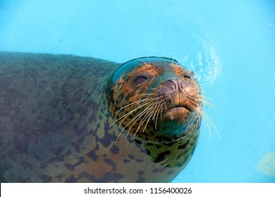 seal in the zoo