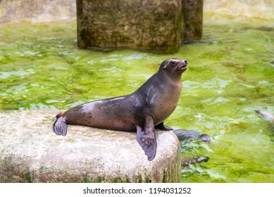 seal in zoo, looking