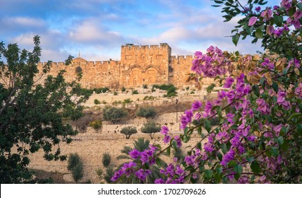 The sealed Golden Gate, also called Mercy Gate - the only eastern gate of the Temple Mount with pink Bougainvillea bush; Old City Jerusalem