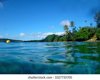 Sealife of Luganville, Espiritu Santo, Vanuatu