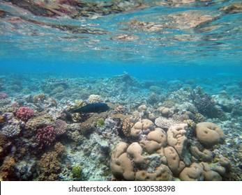 Sealife of Mystery Island, Aneityum, Vanuatu