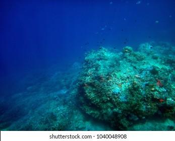 Sealife of Tranquility Island, Efate, Vanuatu