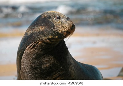 sea-lion and fly