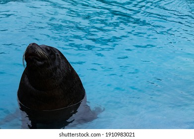 The sealion at the zoo