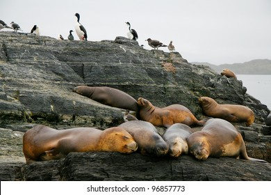 Sealions and cormorants in the Beagle Channel in Ushuaia, Tierra del Fuego, Argentina