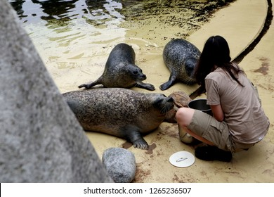 Seals are among the exotic animals that can be found at Antwerp Zoo.