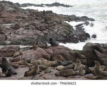 Seals at Cape Cross, Skeleton Coast, Namibia