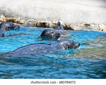 Seals in Dalian Tiger beach Ocean Park, Dalian