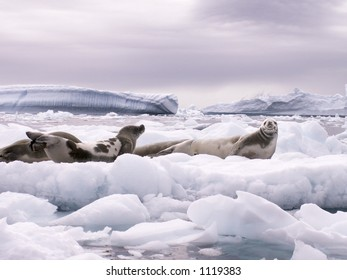 Seals and Icebergs in Antarctica