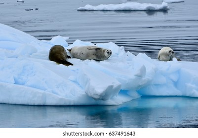 Seals lounging on ice in the Errera Channel, Antarctica