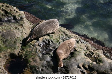 Seals lounging on rocks on the coast in La Jolla, California
