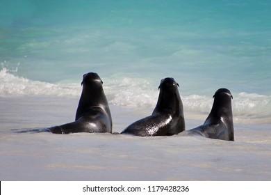 Seals on beach Galapagos Island